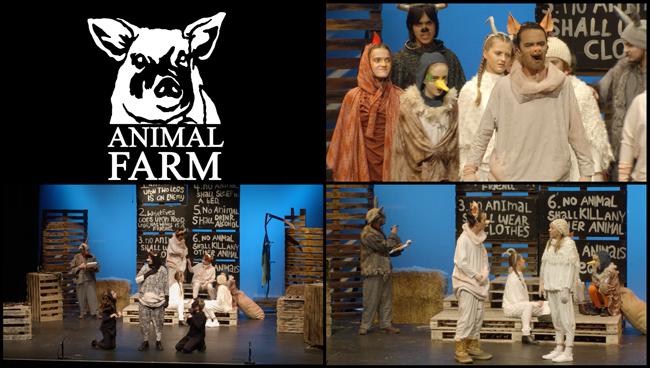 Animal Farm video and photos